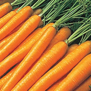 minecraft how to get seeds from carrots