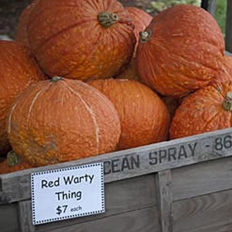 Red Warty Thing Pumpkin