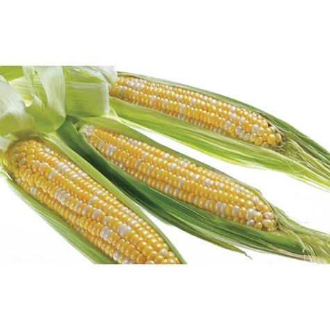 Ka-Ching Hybrid Bicolor (se/sh2) Sweet Corn