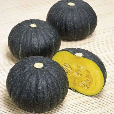 Winter Squash Super Delite Hybrid