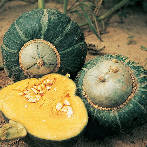 Buttercup Winter Squash