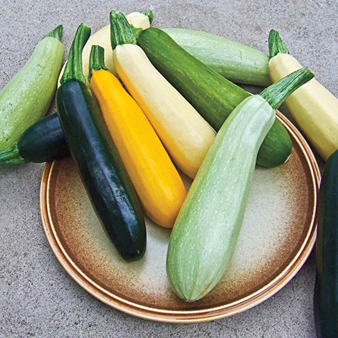 Summer Bounty Hybrid Blend Summer Squash