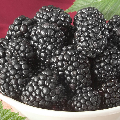 Triple Crown Blackberry