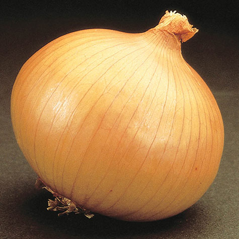 Savannah Sweet Hybrid Onion