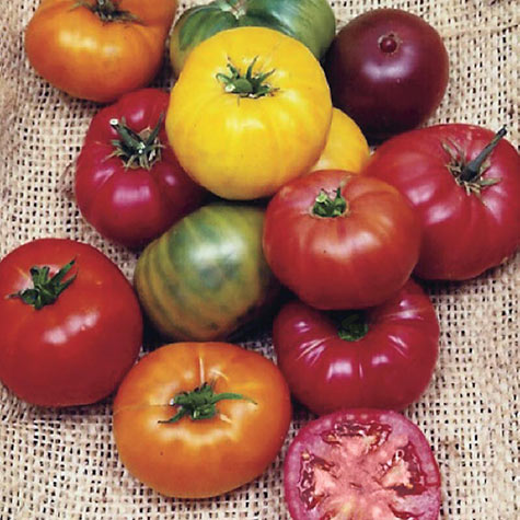 Heirloom Rainbow Blend Tomato