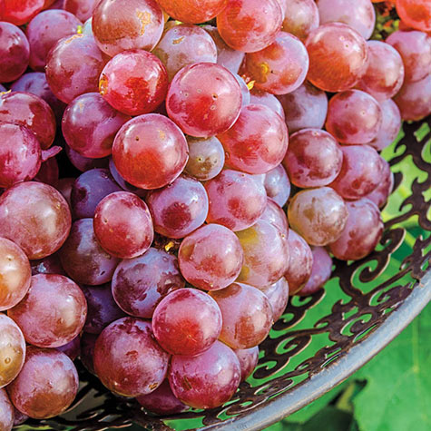 Tickled Pink™ Grapes