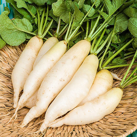White Icicle Summer Radish