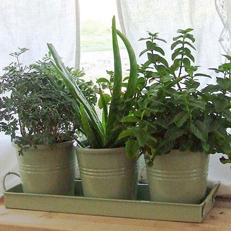 Herb pots for windowsill windowsill herb pots gurneys seed Kitchen windowsill herb pots